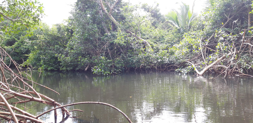 8_image mangrove (2).jpg