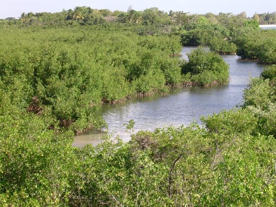 8_image mangrove.jpg