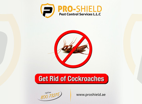 Professional Cockroaches control in dubai