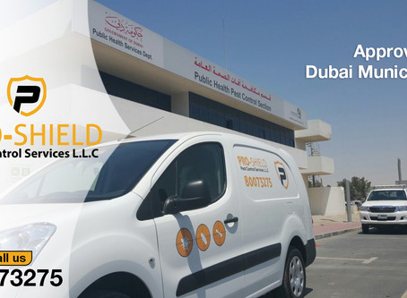 Approved and Certified Pest Control in Dubai
