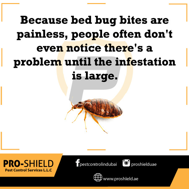 bedbugs facts