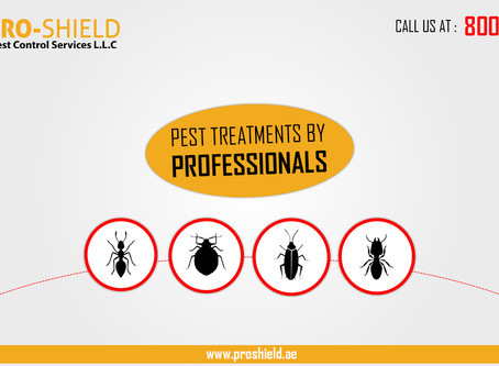 Pest Treatments by Professionals
