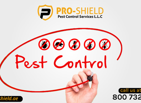 Professional pest control services in dubai