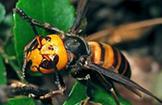 stinging pests treatments