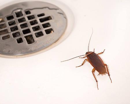pest control dubai for cockroaches