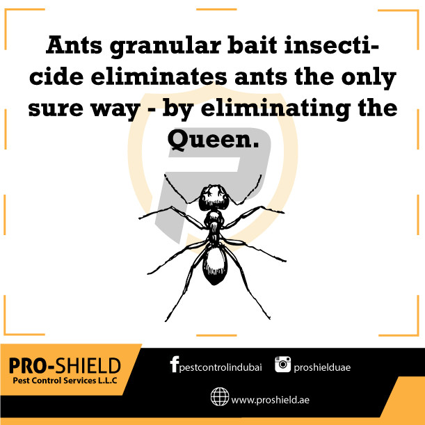 ants facts