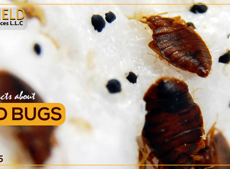 Fast facts on bed bugs
