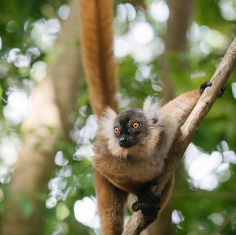 Nosy Be, Nosy Komba, Madagascar-105.jpg