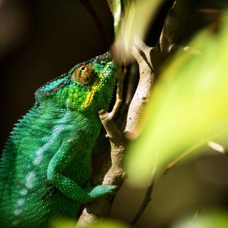 Nosy-Be-&-Nosy-komba,-Madagascar-04.jpg