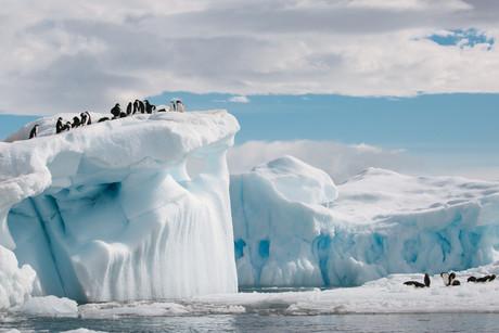 9 Feb, Brown Bluff and Hope Bay, Antarctica-50.jpg