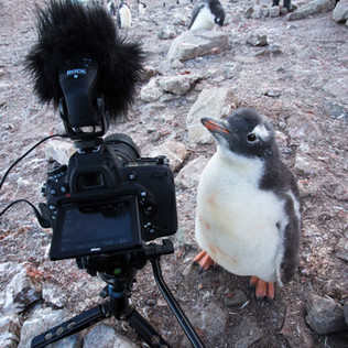 How To Photograph In Polar Regions