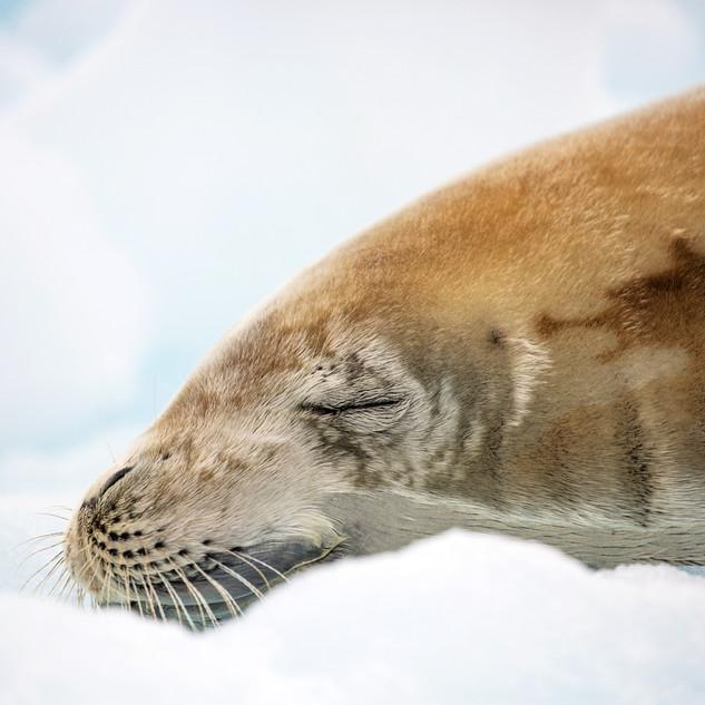 Cierva Cove, Antarctica 04.jpg