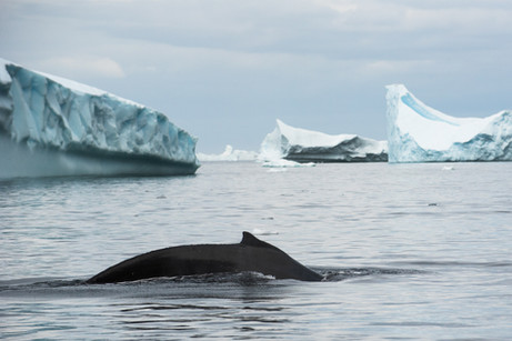 Pleneau Bay, Antarctica 33.jpg