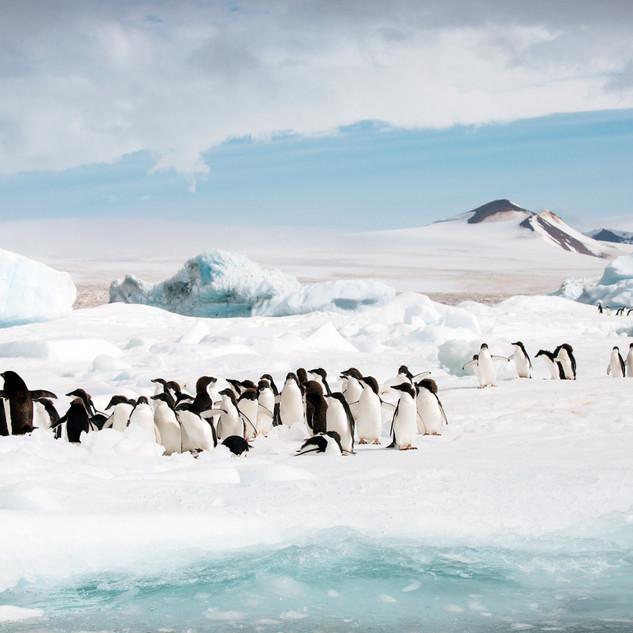 Brown Bluff, Antarctica09.jpg