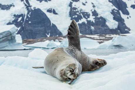 Pleneau Bay, Antarctica 25.jpg