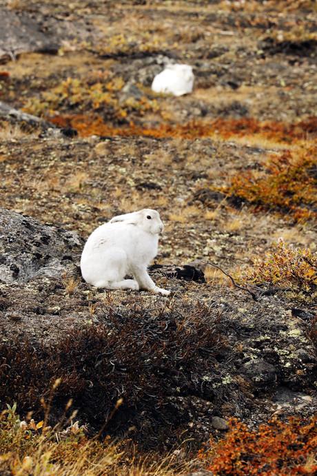 Cape_hofmann_halvø,_Greenland_02.jpg
