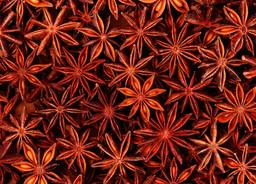 Plant Medicine: Fact or Fiction?