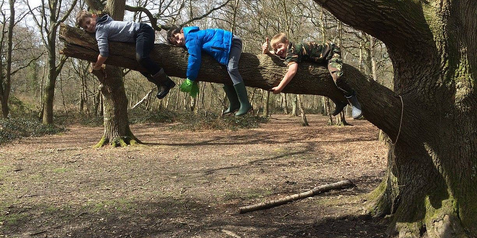 Woodland Activity Session 26th of October 2020