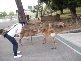 ちょっと時間できたら奈良公園