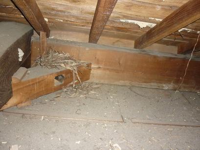 雨漏りの跡がたくさん・・・~天井点検口新設。