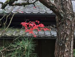 京都「光悦寺」、紅葉がきれいでした。