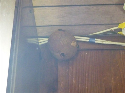 軒裏にスズメバチの巣