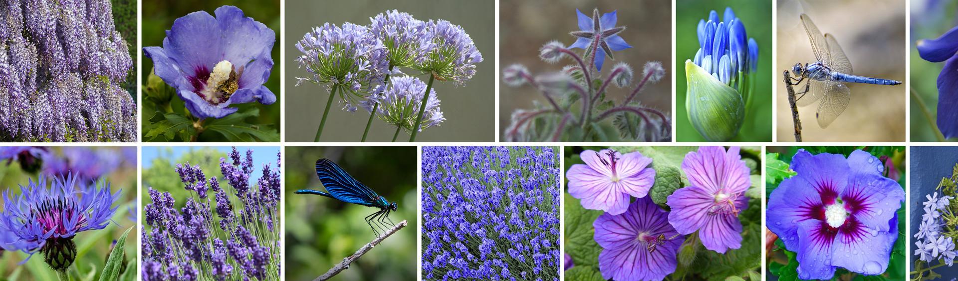 Fleurs-bleues-Poster-web.jpg