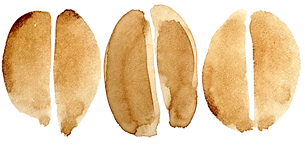 watercolour coffee beans.png