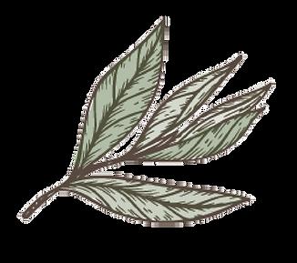 tea leaf sketch colour copy.png