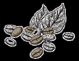 COFFEE BEAN COLOUR copy.png
