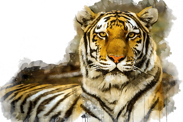 tiger water colour.png