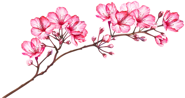 watercolour cherry blossom.png