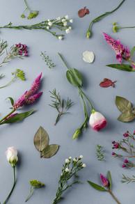 FALL FLOWERS-033.jpg