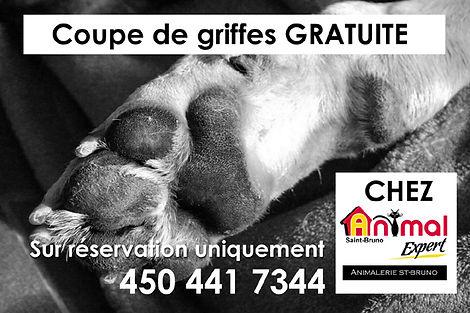 coupede griffes gartuite chez Animal Expert St-Bruno