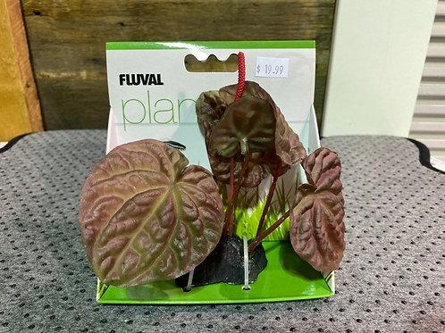 Lotus-plante-Fluval-aquarium-Animal-Expert-St-Bruno