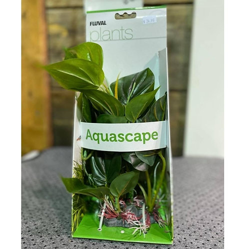 Plante-anubias-aquascape-Fluval-Animal-Expert-St-Bruno