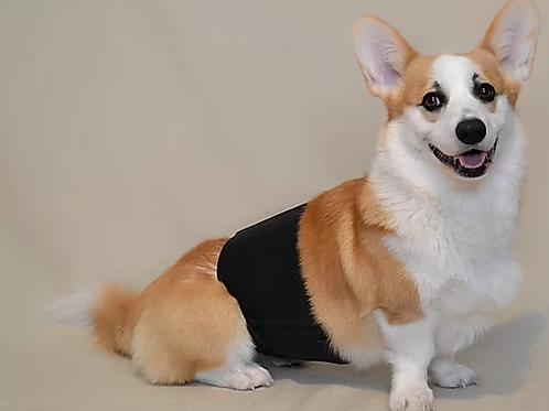 Bandeau d'absorption lavable pour chien de Yamacouche Animal Expert St-Bruno