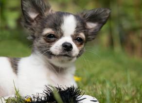 Comment améliorer la vie de votre chien ?