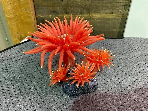 Anemones-de-mer-oranges-aquarium-Animal-Expert-St-Bruno