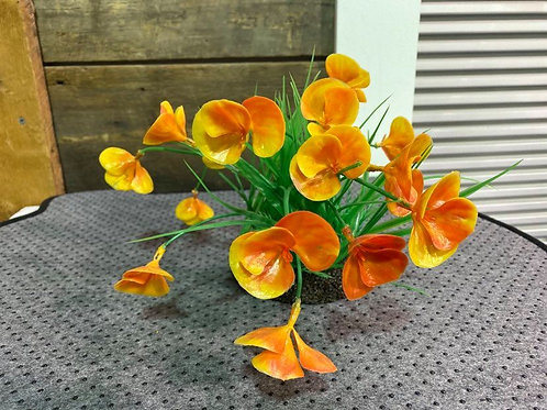Plante-orange-Underwater-Treasure-Animal-Expert-St-Bruno