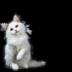 Chat Animal Expert St-Bruno