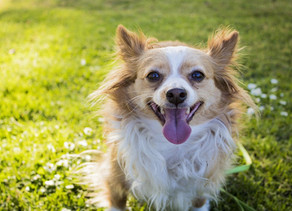 Comment garder son animal de compagnie au frais l'été ?