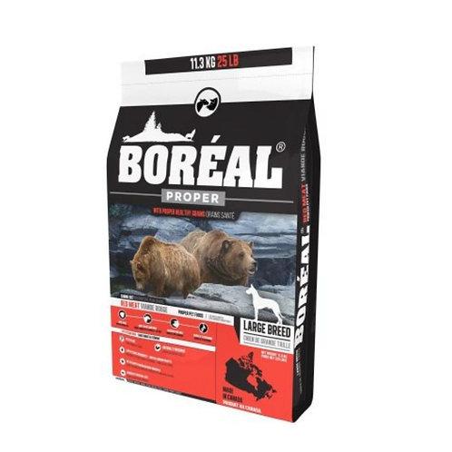 Chien-grande-race-Boreal-Animal-Expert-St-Bruno