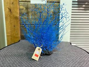 Majestueuse plante bleue