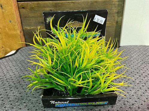 Plante-verte-natural-aquarium-Animal-Expert-St-Bruno