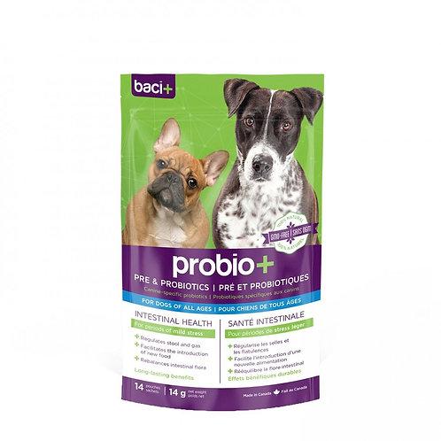 Prébiotique et Probiotique pour chien