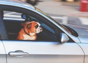 Vacances : conseils pratiques pour faciliter votre trajet en voiture