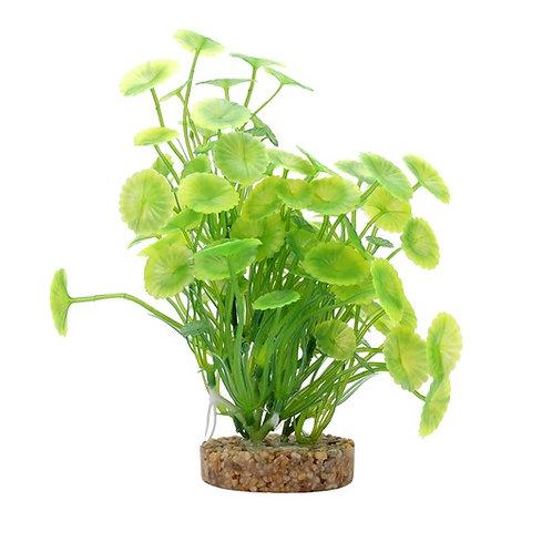 Lysimaque jaune et verte Plant Scapes Aqualife