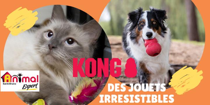 Toutou & matou Kong