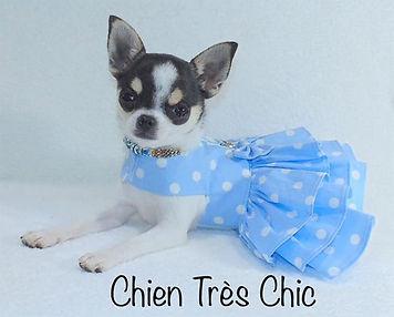 Chien très chic mode canine
